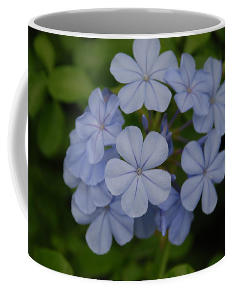 Macro Coffee Mug featuring the photograph Powder Blue Flowers by Rob Hans