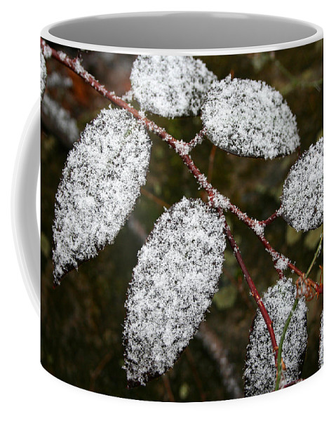 Winter Season Cold Snow Tree Branch Leaf Leaves White Green Frosted Powder Coffee Mug featuring the photograph Powdered by Andrei Shliakhau