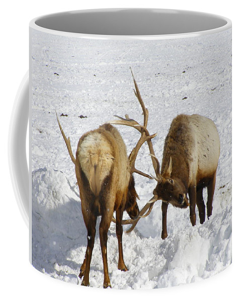 Elk Coffee Mug featuring the photograph Practice Makes Perfect by DeeLon Merritt