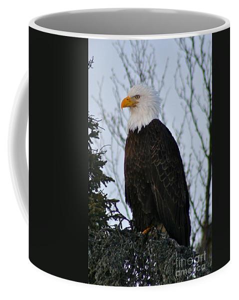 Eagle Coffee Mug featuring the photograph Predator Profile by Rick Monyahan