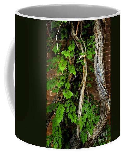 Preston Castle Coffee Mug featuring the photograph Preston Wall Vine by Norman Andrus