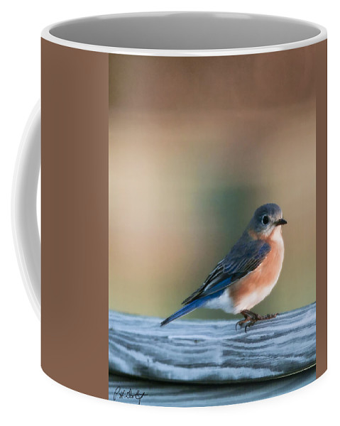 Bird Coffee Mug featuring the photograph Pretty In Blue by Phill Doherty