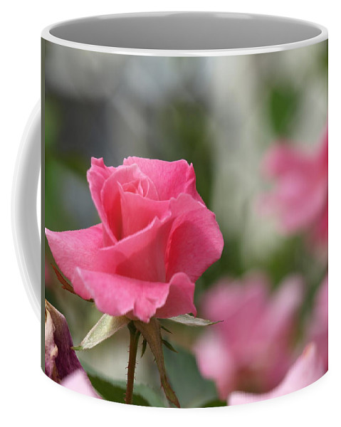 Pink Coffee Mug featuring the photograph Pretty In Pink Rose by Cathy Smith