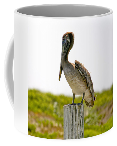 Pelican Coffee Mug featuring the photograph Pretty Pelican by Marilyn Hunt