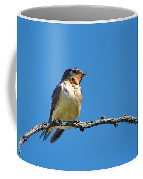 Nature Coffee Mug featuring the photograph Pretty Percher by Crystal Massop