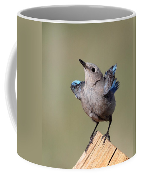 Blue Bird Coffee Mug featuring the photograph Pretty Pose by Shane Bechler