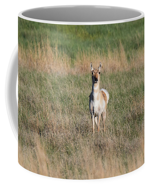 Pronghorn Coffee Mug featuring the photograph Pretty Pronghorn On The Plains by Tony Hake