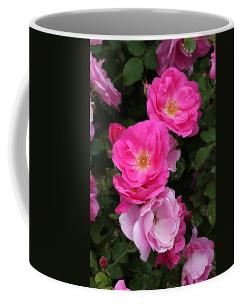 Rose Coffee Mug featuring the photograph Profusion Of Pink by Doris Potter