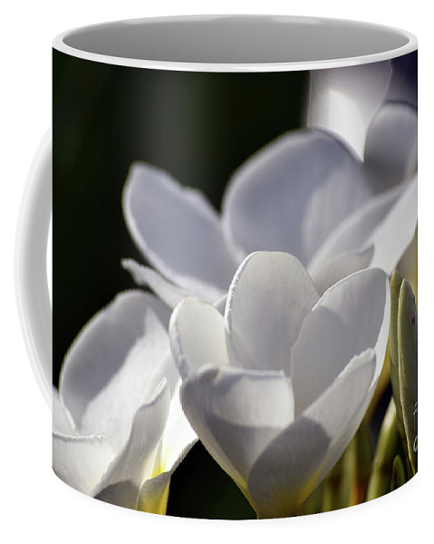 Pinwheel Jasmine Coffee Mug featuring the photograph Promises In White by William Tasker