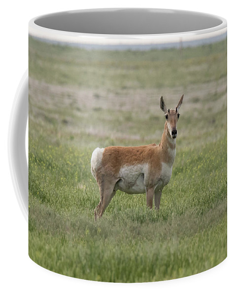 Pronghorn Coffee Mug featuring the photograph Pronghorn On The Plains by Tony Hake