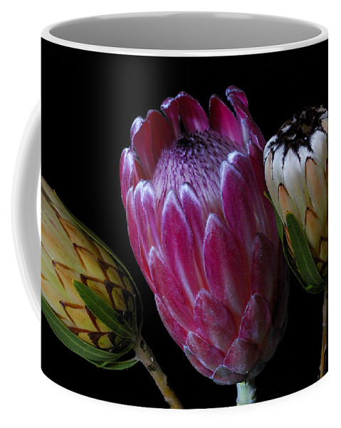 Proteas Coffee Mug featuring the photograph Proteas by Wayne Sherriff