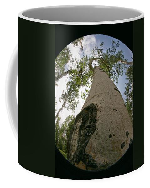 Nature Coffee Mug featuring the photograph Proud Aspen by Jeffery Ball