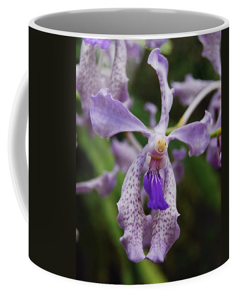 Orchids Coffee Mug featuring the photograph Proud Girl by Michael Peychich