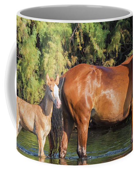 Horse Coffee Mug featuring the photograph Proud Mare by Robin O'Donnell