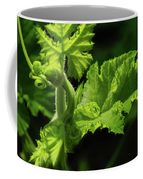 Isolated Coffee Mug featuring the photograph Pumpkin Vine by Mellissa Ray
