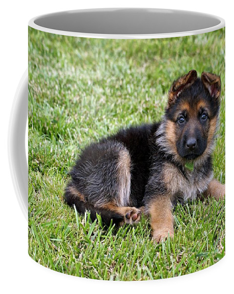 Dogs Coffee Mug featuring the photograph Puppy In The Spring by Sandy Keeton