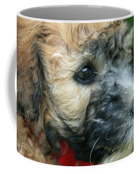 Dog Coffee Mug featuring the photograph Puppy Love I by Cheryl Rose