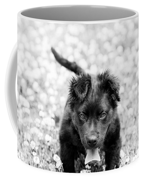 Dog Coffee Mug featuring the photograph Puppy Play by James Hennis