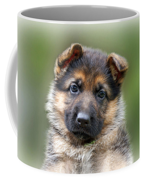 Puppies Coffee Mug featuring the photograph Puppy Portrait by Sandy Keeton
