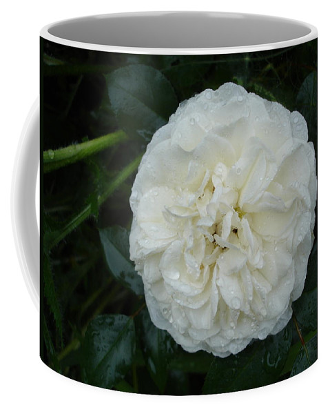 Rose Coffee Mug featuring the photograph Purity And Perfection by Susan Baker