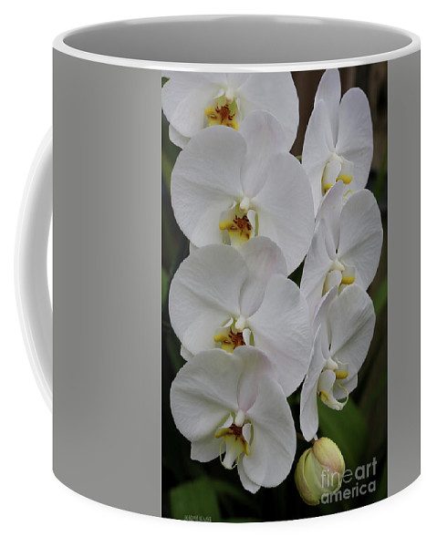 Orchids Coffee Mug featuring the photograph Purity by Deborah Benoit