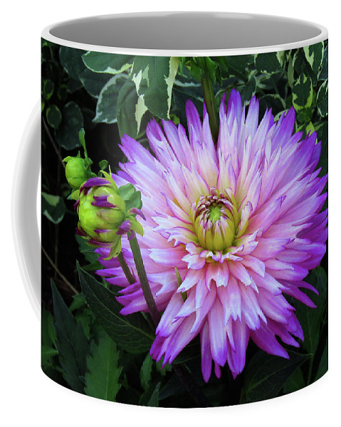 Dahlia Coffee Mug featuring the photograph Purple And White Dahlia by Rosalie Scanlon