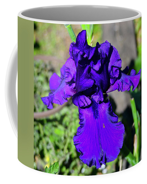 Flower Coffee Mug featuring the photograph Purple Bearded Iris By Chris White by C H Apperson