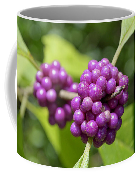 Beautyberry Coffee Mug featuring the photograph Purple Beautyberries by Kenneth Albin
