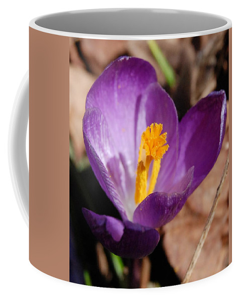 Digital Photography Coffee Mug featuring the photograph Purple Crocus by David Lane