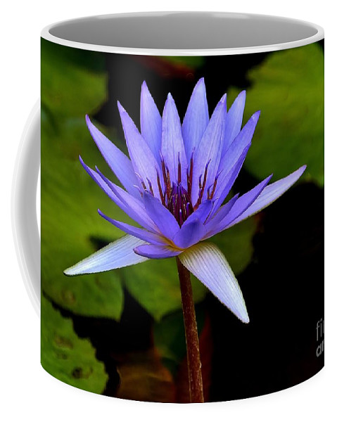 Purple Enchantment Coffee Mug featuring the photograph Purple Enchantment 6 by Lisa Renee Ludlum
