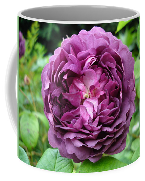 Rose Coffee Mug featuring the photograph Purple English Rose by Susan Baker