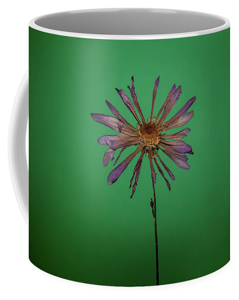 Art Coffee Mug featuring the photograph Purple Flower Green Background by Daniel Hernandez
