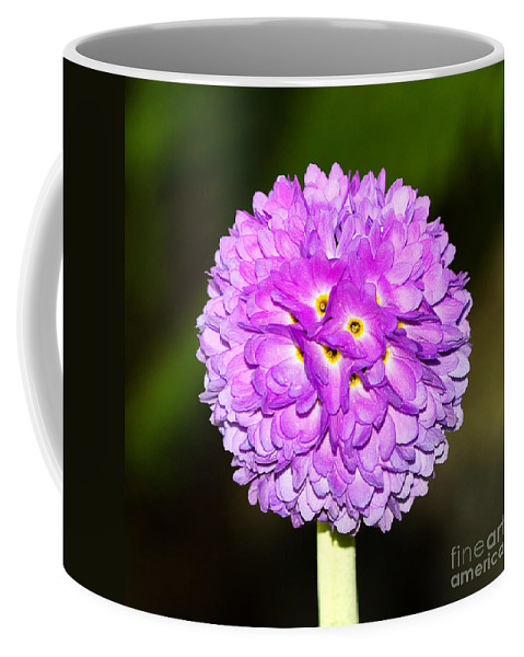 Flower Coffee Mug featuring the photograph Purple Himalayan Primrose by Louise Heusinkveld