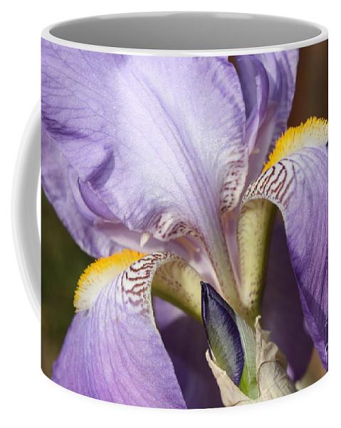 Purple Iris Coffee Mug featuring the photograph Purple Iris Beauty by Carol Groenen