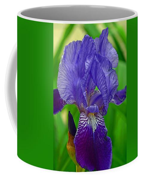 Purple Iris Coffee Mug featuring the photograph Purple Iris by Lisa Phillips