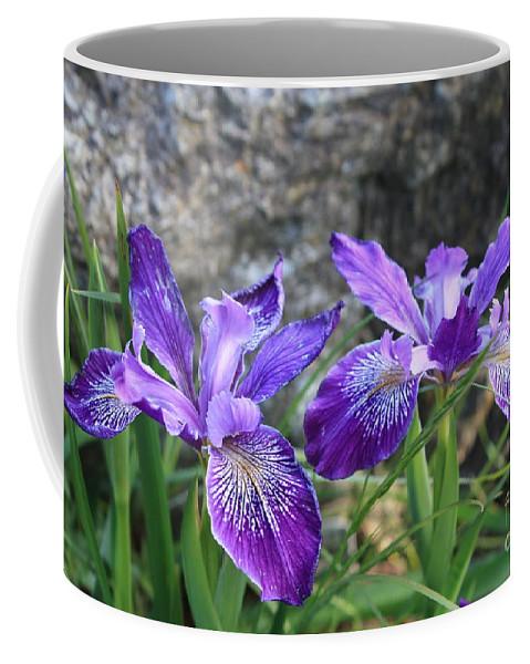 Purple Coffee Mug featuring the photograph Purple Irises With Gray Rock by Carol Groenen