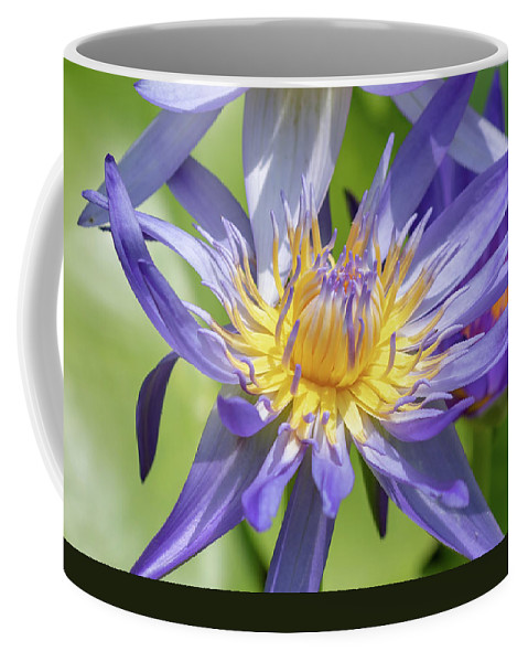 Beauty Coffee Mug featuring the photograph Tropical Purple Water Lily by Merrillie Redden
