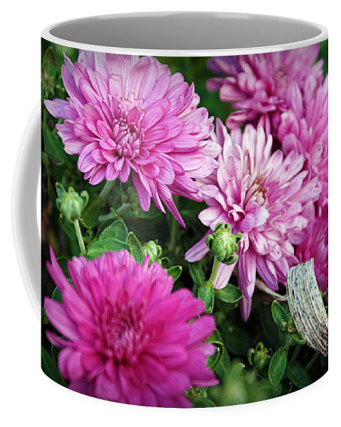 Flowers Coffee Mug featuring the photograph Purple Mums by Cricket Hackmann