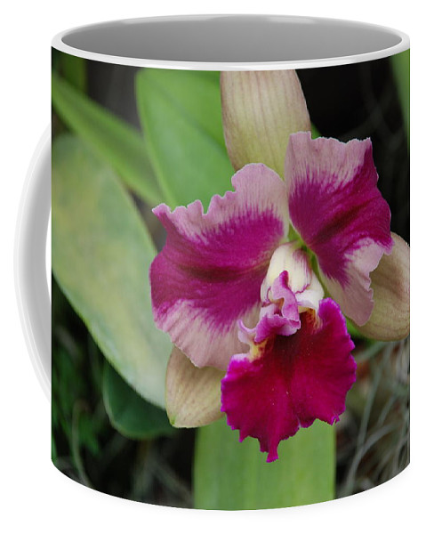 Macro Coffee Mug featuring the photograph Purple Orchid by Rob Hans