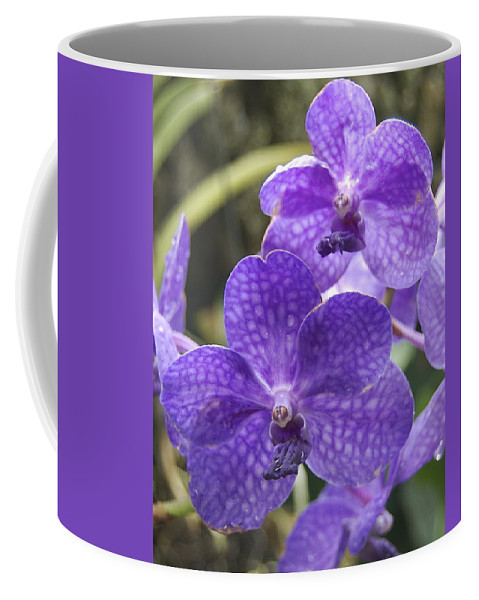 Orchids Coffee Mug featuring the photograph Purple Orchids by Michael Peychich