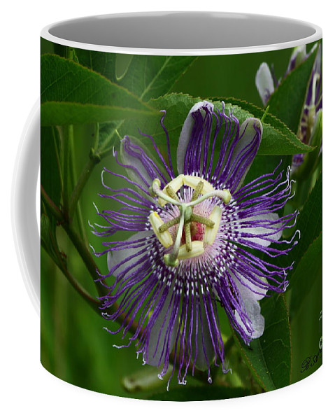 Passion Flower Coffee Mug featuring the photograph Purple Passion Flower by Barbara Bowen