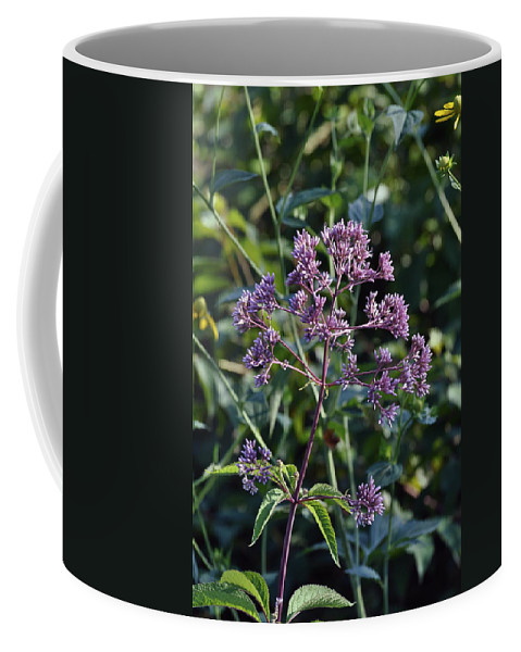 Purple Flower Coffee Mug featuring the photograph Purple by Penny Neimiller