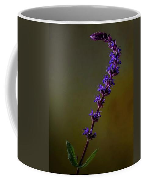 Purple Salvia Coffee Mug featuring the photograph Purple Salvia Flower by Art Whitton