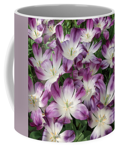 Holland Coffee Mug featuring the photograph Purple Tulips by Cheryl Schneider