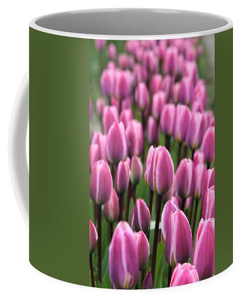 Tulips Coffee Mug featuring the photograph Purple Tulips by Glenn Wachtman