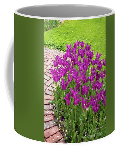Tulip Coffee Mug featuring the photograph Purple Tulips by Terri Morris