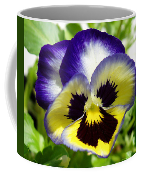Pansy Coffee Mug featuring the photograph Purple White and Yellow Pansy by Nancy Mueller