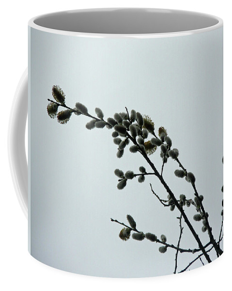 \\\pussy Willow\\\ Coffee Mug featuring the photograph Pussy Willow Catkins by Mother Nature