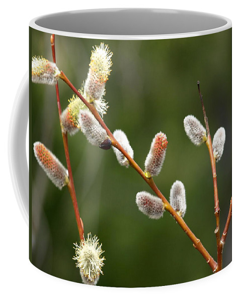 Willows Coffee Mug featuring the photograph Pussy Willows In Spring by DeeLon Merritt