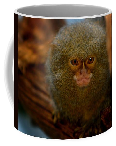 Pygmy Marmoset Coffee Mug featuring the photograph Pygmy Marmoset by Anthony Jones